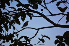 La silhouette d'oiseau Image stock
