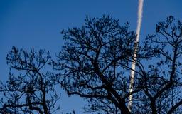 La silhouette d'un arbre contre un ciel bleu avec un signe des avions remplissent de combustible Image stock