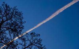 La silhouette d'un arbre contre un ciel bleu avec un signe des avions remplissent de combustible Photo stock