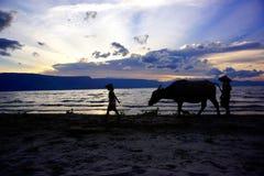 La silhouette de deux garçons et une vache marchant sur un coucher du soleil échouent en Indonésie Photo stock