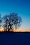La silhouette de l'arbre Photos stock