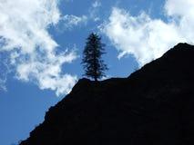 La silhouette de l'arbre reculé dans la vallée Weisstannenthal photos libres de droits