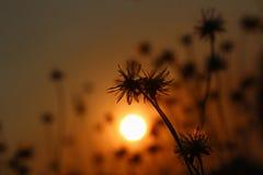 La silhouette de l'herbe Photographie stock libre de droits