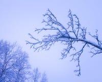 La silhouette de la neige a couvert des branches Photo libre de droits