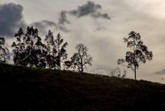 La silhouette de quelques arbres en haut d'une colline image stock