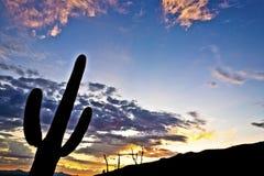 La silhouette du cactus dans le coucher du soleil de désert a allumé le ciel Images stock