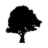 La silhouette noire d'un arbre sur un fond blanc Photos stock