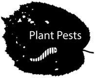 La silhouette noire d'une feuille d'arbre a endommagé par des parasites Photo libre de droits