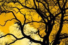 La silhouette noire de l'arbre contre le ciel de coucher du soleil Photographie stock libre de droits