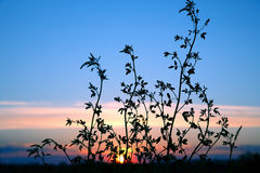 La silhouette plante la fleur contre le coucher de soleil Images stock