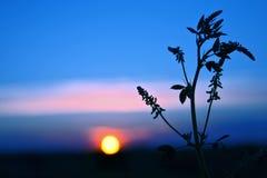 La silhouette plante la fleur contre le coucher de soleil Photographie stock libre de droits