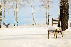 La silla se coloca en medio de abedul del invierno Imagen de archivo
