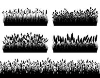 La silueta de las fronteras de la hierba fijó en el vector blanco del fondo Fotografía de archivo