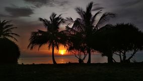 La silueta de las palmeras en la puesta del sol imagen de archivo
