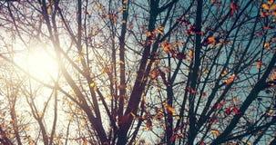 La silueta de los árboles forestales y las hojas de otoño amarillas y rojas coloridas en el cielo de la luz del día con la llamar almacen de metraje de vídeo