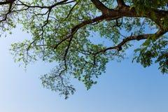 La silueta del árbol imagen de archivo