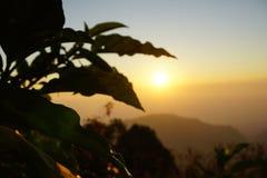 La silueta sale de la planta en puesta del sol en Tailandia del norte Fotos de archivo libres de regalías