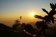 La silueta sale de la planta en puesta del sol en Tailandia del norte Fotografía de archivo