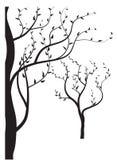 La siluetta degli alberi Fotografia Stock