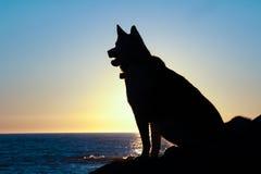 La siluetta del cane del husky si siede al tramonto Immagine Stock