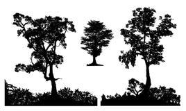 La siluetta del giardino dell'albero forestale ha messo tre immagini stock libere da diritti