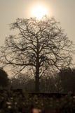 La siluetta dell'albero Fotografia Stock