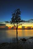 La siluetta dell'albero che pende sopra il lago in Surin Immagine Stock Libera da Diritti