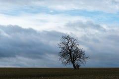 La siluetta dell'albero solo in tempo tempestoso fotografia stock libera da diritti