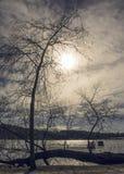 La siluetta della betulla si ramifica davanti al cielo soleggiato drammatico Fotografia Stock