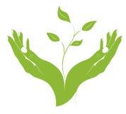 La siluetta della pianta giovane in mani femminili. Immagine Stock Libera da Diritti