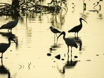 La siluetta di alcuni uccelli ha catturato in India occidentale Fotografia Stock