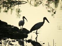 La siluetta di alcuni uccelli ha catturato in India occidentale Immagini Stock