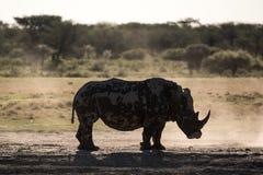 La siluetta di un rinoceronte in lampadina fotografie stock libere da diritti