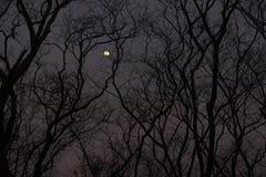La siluetta di un treeline sfrondato immagine stock