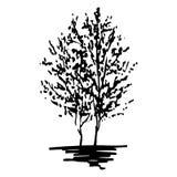 La siluetta monocromatica degli alberi ha schizzato la linea vettore isolato di arte Fotografia Stock