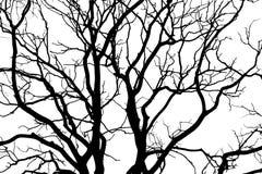 La siluetta nera dell'albero Fotografia Stock Libera da Diritti