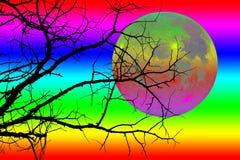 La siluetta nera dell'albero Fotografia Stock