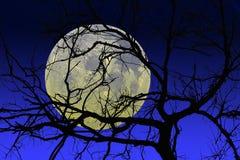 La siluetta nera dell'albero Immagine Stock Libera da Diritti