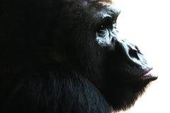 La singe Image libre de droits