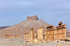 La Siria - Palmyra (Tadmor) Immagini Stock Libere da Diritti