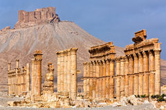 La Siria - Palmyra (Tadmor) Fotografie Stock Libere da Diritti