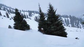 La snowboard más rápida El snowboarder extremo ayuna montar a caballo metrajes