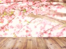 La sobremesa sobre las flores de cerezo rosadas florece en la plena floración imágenes de archivo libres de regalías