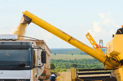 La soia di versamento sul camion dopo il raccolto condisce Fotografie Stock