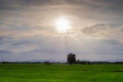 La soirée Sun brille sur le champ photos libres de droits