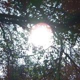 La sol consideró entre las hojas Fotos de archivo