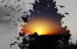 La sol de la salida del sol corrige Imágenes de archivo libres de regalías