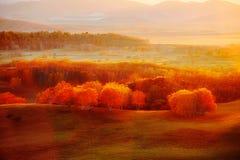 La sol de oro en el bosque del abedul blanco Imagen de archivo