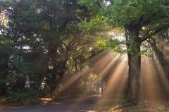 la sol/el Sun fantásticos de la mañana emite fluir a través del th Foto de archivo libre de regalías