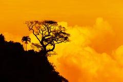 La sola silueta del árbol con amarillo se nubla puesta del sol Imagen de archivo